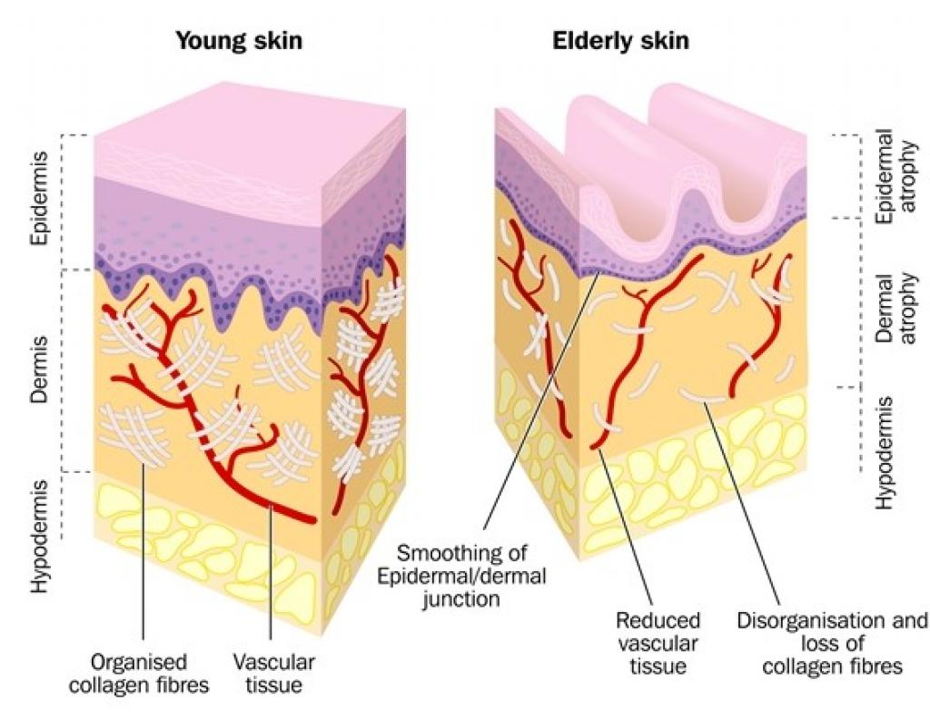 No image description provided for Hyaluronic Acid Skincare Myth Or Miracle.
