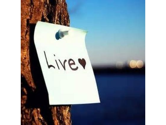 Sign posted on a tree with the word live.