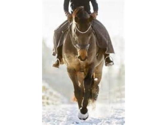 Man on a horse