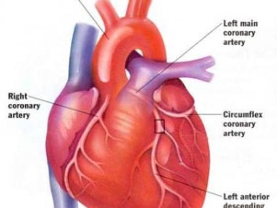 No image description provided for Take Notice Of CAD Manage Your Heart's Health.